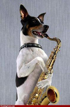 """Résultat de recherche d'images pour """"saxophone humour"""""""