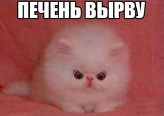 Stupid Cat, Stupid Funny Memes, Funny Relatable Memes, Hello Memes, Happy Memes, Russian Memes, Cute Love Memes, All The Things Meme, Meme Pictures