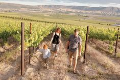 Old Wine Country in Yakima/Red Mountain
