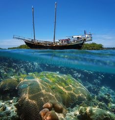 Photo about Over-under split view of an old sailing boat stranded on a reef with shoal of tropical fish and coral under the water surface, Caribbean sea. Image of panama, seabed, life - 42282120 Gopro Underwater, Underwater Photos, Sailing Ships, Sailing Boat, Caribbean Sea, Tropical Fish, Sailboat, Serenity, Coral