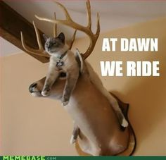 At dawn we ride #funnyhuntingpictures