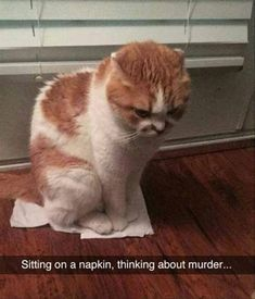 "Thirty Cute Cat Memes For The Feline Fiends - Funny memes that ""GET IT"" and want you to too. Get the latest funniest memes and keep up what is going on in the meme-o-sphere. Funny Animal Memes, Cute Funny Animals, Funny Animal Pictures, Cute Baby Animals, Animals And Pets, Funny Memes, Memes Humour, Animal Pics, Funny Gifs"