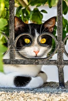 cat looking through the fence