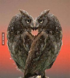 Owls heart