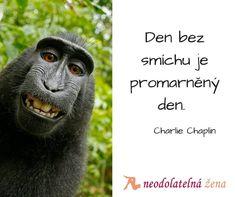 #den #smich #blogger #love #live #citaty #monkey Charlie Chaplin, Monkey, Jumpsuit, Monkeys, At Sign