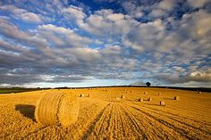 Image result for WI crops in fields in fall photos
