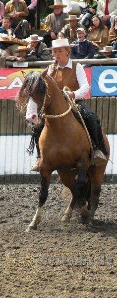 Así es la mujer chilena !!! American Quarter Horse, Quarter Horses, Horse Caballo, Island Horse, Easter Island, Conquistador, Recorded Books, Arabian Horses, Gaucho