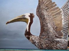 Young Brown Pelican - Media - Artist Daily