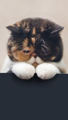 cat_sad_beautiful_legs_face_fat_66539_750x1334.jpg