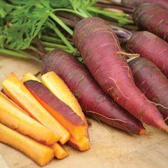 Carrot 'Cosmic Purple' - Carrot & Parsnip Seeds - Thompson & Morgan Worldwide
