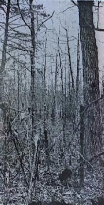 In the Wilderness, May 6th 1864