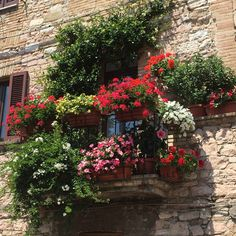 Flower boxes in Assisi, Italy.