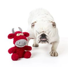 Keep your furry friend happy. Despite being super plush, Dog Toy Jordan the Bull is tougher than he looks! Floppy Limbs for Dog Interaction. Pet Clothes, Dog Toys, Your Pet, French Bulldog, Jordans, Plush, Bull Dog, Fur, Dogs