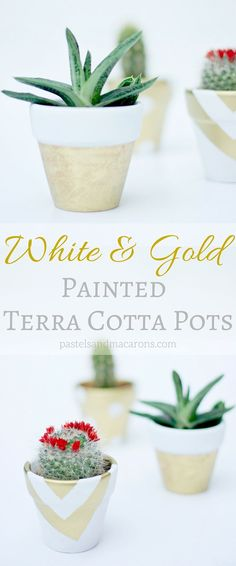 I love the gold accents in these DIY White And Gold Painted Terra Cotta Pots. Perfect planters for succulents.