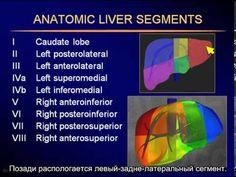УЗИ печени - Sonography of the liver