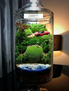 Moss terrarium with car