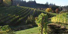 chehalem winery in the willamette valley