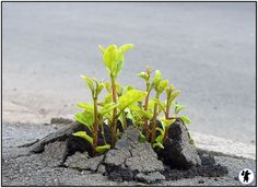 Nature Always Finds a way.Never give up ! Protect Nature, La Ilaha Illallah, Growing Flowers, Amazing Nature, Mother Earth, Never Give Up, Just Love, Beautiful Pictures, Amazing Photos