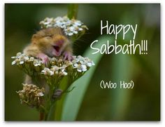 Happy Sabbath, Little Mouse...