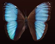 The+Year+of+the+Butterfly+and+Positive+Affirmations