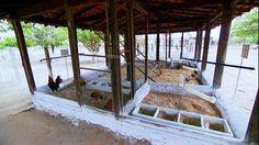 Muita gente escreve para o Globo Rural com dúvidas sobre galinha caipira. Iracema Santos, de Belém, quer saber como fazer um modelo simples de galinheiro, com estrutura de tela e alvenaria, adequado para um quintal pequeno.