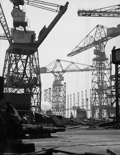 E.O. Hoppé - Cranes
