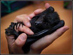 I adore bats <3