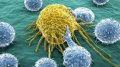 Estudio sugiere que algunos tipos de cáncer tienen predilección por la grasa #Ciencia #cancer #Grasas