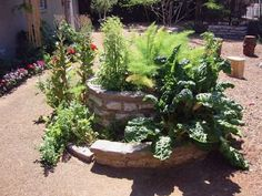 Easy Herb Spiral Garden Design Ideas for Small Yard Inspiration Herb Spiral, Spiral Garden, Herb Garden, Water Plants, All Plants, Vertical Garden Design, Plant Growth, Kraut, Trees To Plant