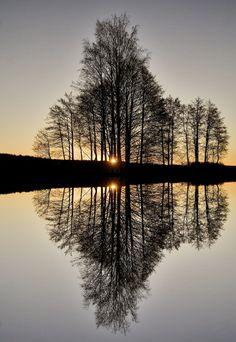 Perfect Reflection !!!! | Amazing Snapz (6/7/2013) Nature: Trees (CTS)