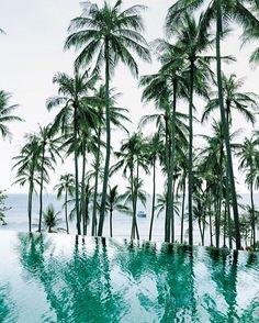A little tropical motivation to get us to the weekend!  . . . . #swimwear #beach #swimsuit #bikinilife #palmtrees #cassandraelleswimwear #vacation #summer #holiday #california #cali #ocean #surf #wanderlust #fashion #instafashion #luxury #travel #instatravel #bestoftheday #picoftheday #instalove #malibu #inspiration #motivation #travelphotography
