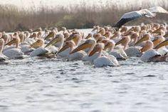 Imagini pentru delta dunarii imagini fauna