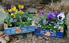 Reuse those clementine boxes! A cute way to brighten up stairs or outdoor tables. Probably a one-season thing.
