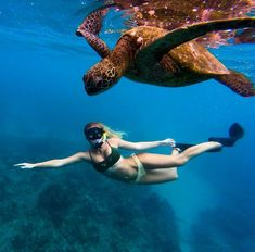 Snorkeling with turtles - Photo
