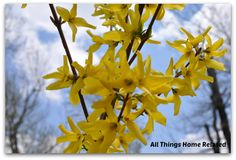 Spring has Sprung - All Things Home Related
