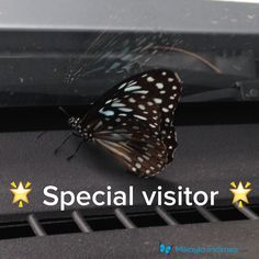 You know it's a special day when a butterfly flies in a car just to say hi  Fluttering kisses to everyone today     Your sign is everywhere, when you Get in Sync #getinsync #mikayla #butterfly #yoursign  www.mikayla-holmes.com  Follow me for #inspirationalquotes #motivate #affirmations #success #positive #takeaction #believe #lawofattraction #inspiration #love #gratitude.  Intention is everything and there is some awesomeness in all of us. Be awesome.
