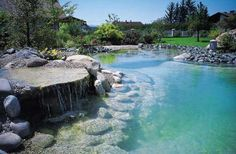 Natural filtration swimming pools. MUST have.