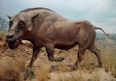 Dinohyus