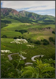 Queen Anne Lace in Crested Butte by Ronda Kimbrow, via 500px