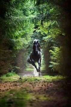 Warmhearted reasoned horse breed view it now Most Beautiful Horses, All The Pretty Horses, Animals Beautiful, Cute Horses, Horse Love, Black Horses, Wild Horses, Horse Wallpaper, Majestic Horse