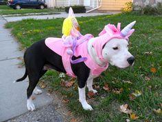 <3 dog costume, unicorn, american staffordshire terrier, amstaff
