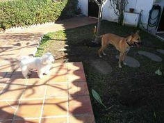 Ratos en casa 01/17 Tana, Shifu, Milo y Chico