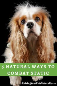"""Here are five ways to naturally help combat static electricity in your home and with your pet. Pets often receive the brunt of static shock with their fuzzy feet walking on carpet, then touching the metal water bowl or another surface. Some pets can even become fearful or agitated during winter months, possibly due to the """"unknown shock."""""""
