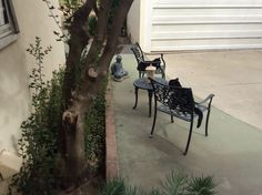 Two tuxedos meeting and greeting on my back patio. Spring 2014.
