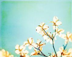 Floral Photography  aqua blue white dogwood by CarolynCochrane, $30.00