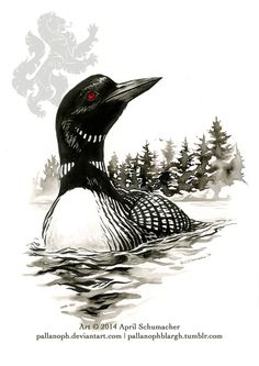 Loon: Star of the North by pallanoph on DeviantArt