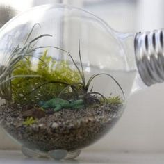 How to make an adorable little terrarium inside a lightbulb! For a while now, i've been fascinated with terrariums ever since i made the cutest little clay mushrooms ever!