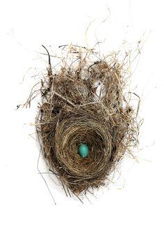 robin-nest-with-egg-2