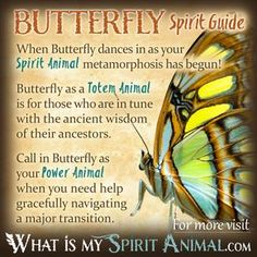 Hundreds of in-depth Spirit, Totem, & Power Animal Meanings! Learn the spiritual symbolism and meaning of your Animal Spirit Guide, Totem, & Power Animal! Butterfly Spirit Animal, Spirit Animal Totem, Animal Spirit Guides, Butterfly Quotes, Your Spirit Animal, Dragonfly Quotes, Animal Meanings, Animal Symbolism, Butterfly Symbolism