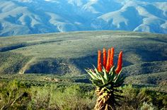 D, Rockets. Baviaanskloof by Deontjie St Francis, Rockets, South Africa, Travelling, Places To Go, Beautiful Places, Scenery, Adventure, Mountains
